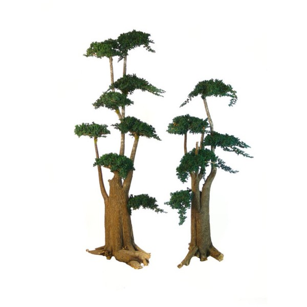 arbre bonsa juniperus stabilis 7 floor. Black Bedroom Furniture Sets. Home Design Ideas