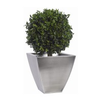 BOULE DE BUIS PITTOSPORUM